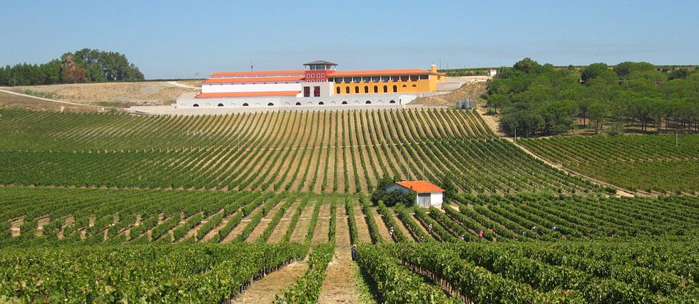 Vinhos campolargo