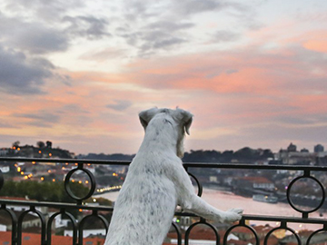 Pet Friendly - The Yeatman, Porto