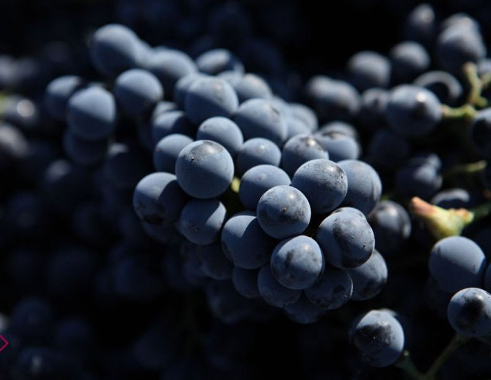 Wine Grapes from Portugal