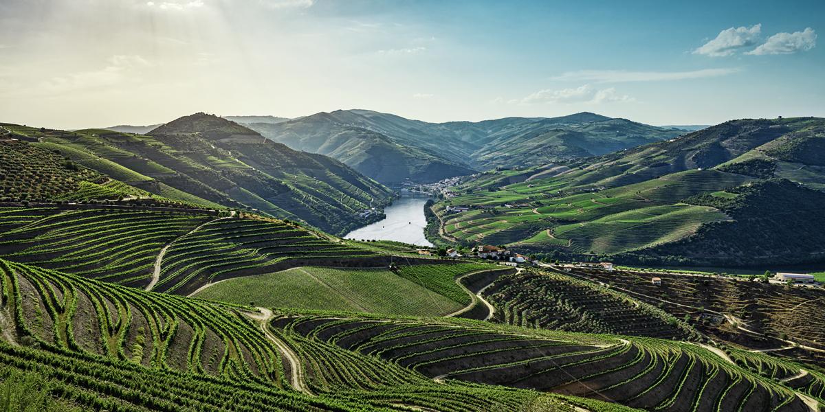 Douro Experience