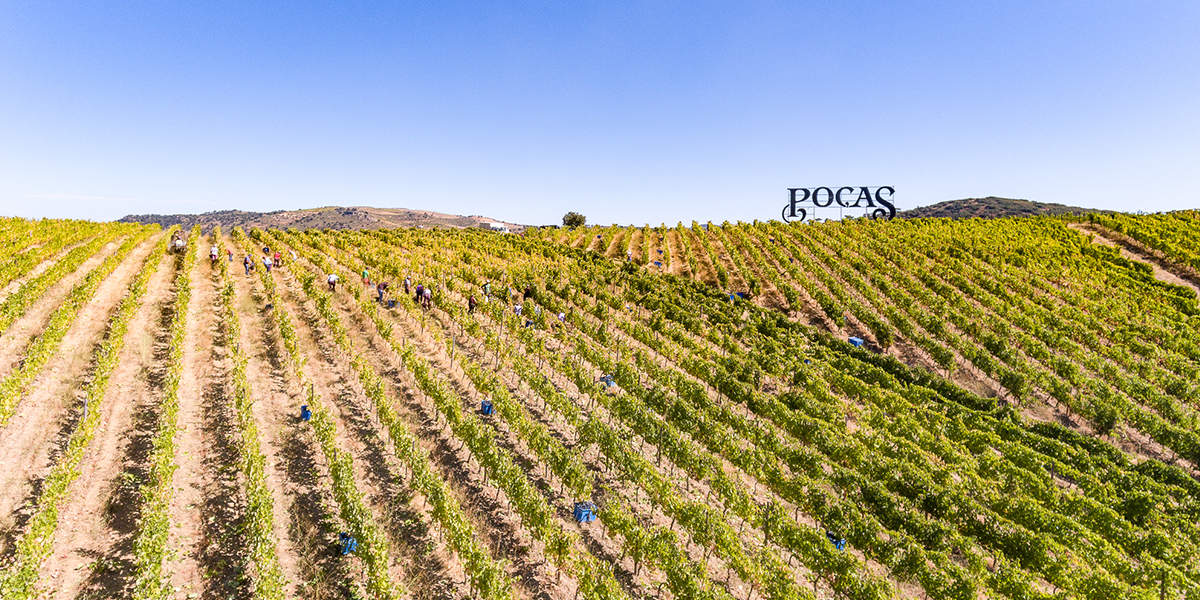 Poças - Wine Partner - The Yeatman