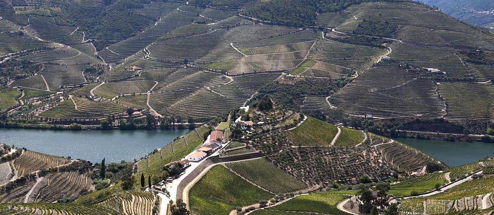 Quinta Do Crasto Wines